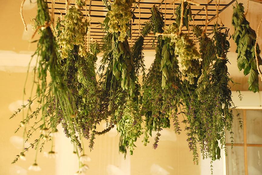 essiccate erbe
