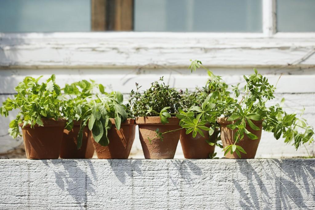 Il balcone aromatico coltivare le piante aromatiche in vaso inherba il mondo delle piante - Coltivare piante aromatiche in casa ...