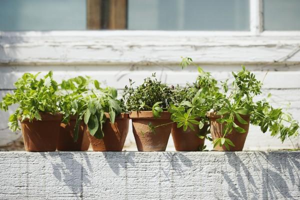 Vasi Per Piante Aromatiche.Il Balcone Aromatico Coltivare Le Piante Aromatiche In Vaso