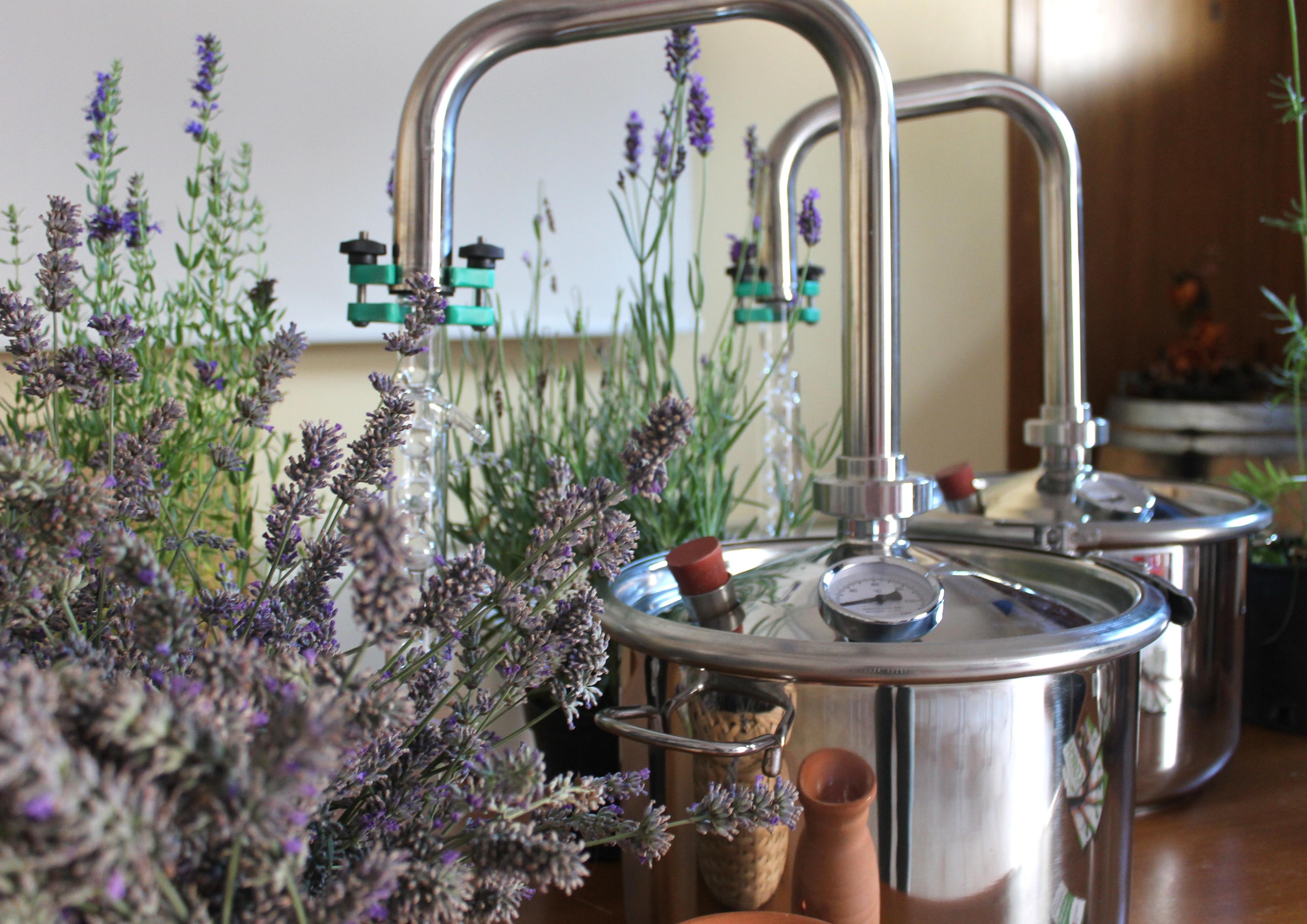 distil lavanda