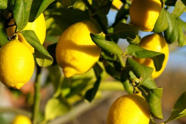limone 2