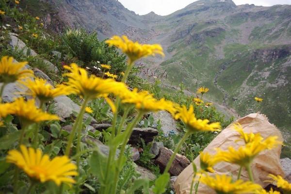 Le Piante Medicinali : Le piante officinali dell arco alpino leggi e divieti