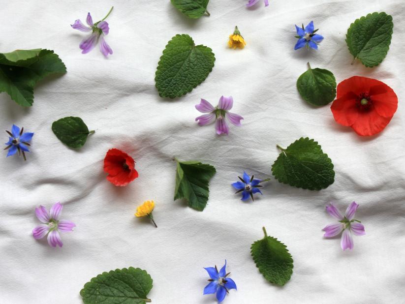 fiori silvestri