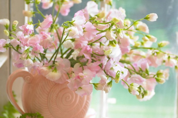 casa di primavera_16