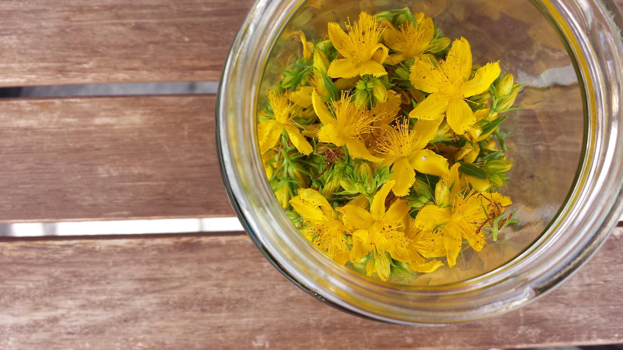 iperico fiori 6