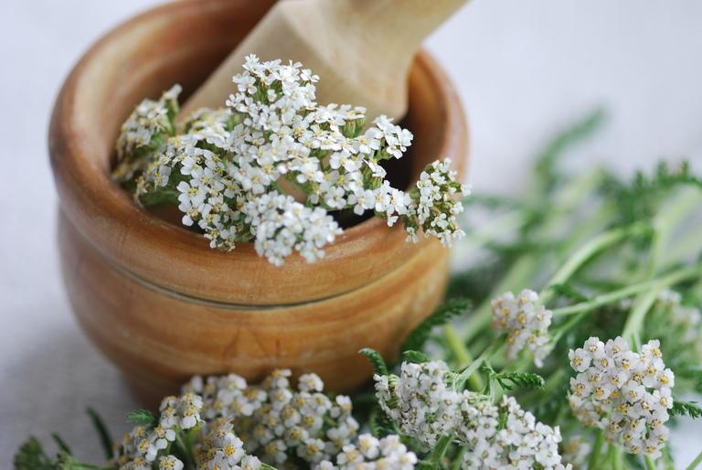 Apothekengutschein  Gemeine Scharfgarbe (Achillea millefolium)