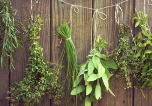 erbe-essicate-al-filo-2