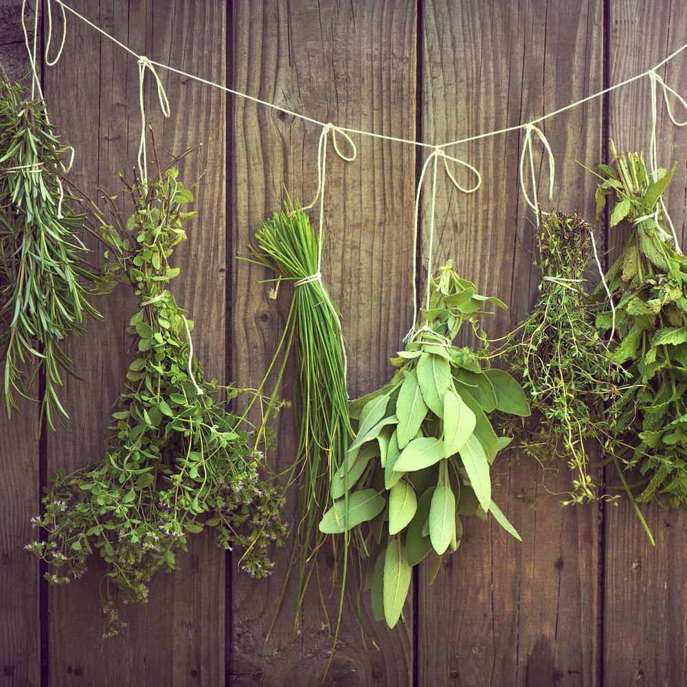 Come Seccare Le Piante piante aromatiche e medicinali: tecniche di essiccazione