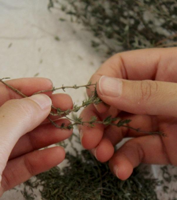 lavorazione-erbe-secche-1