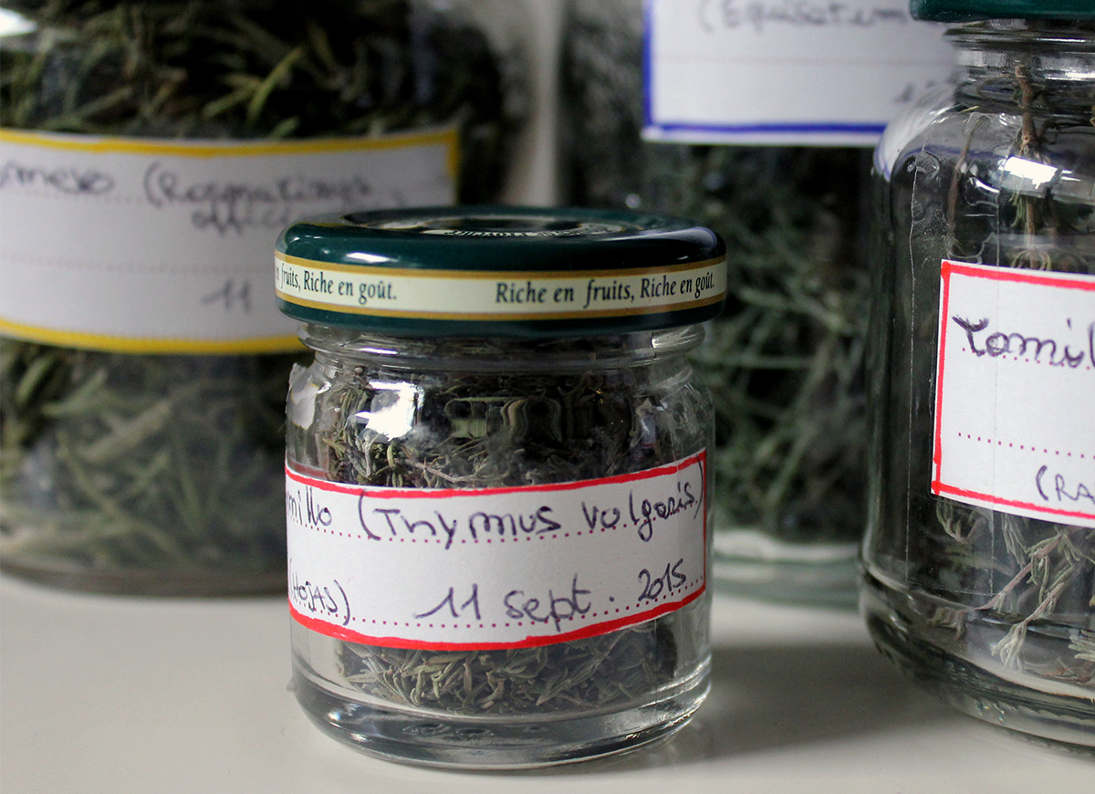 piante-con-etichette