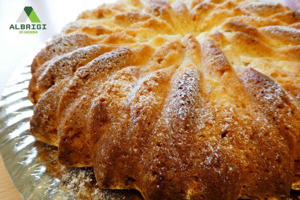 torta-logo-piccolo-gmp