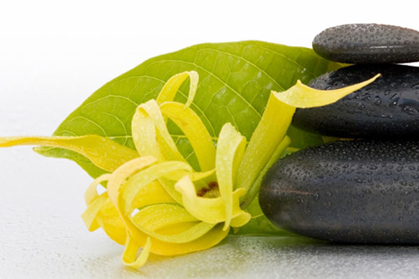 ylang-ylang-fiori-e-sassi-1