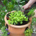 giardino aromatico 2